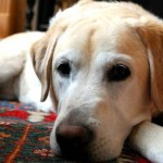forte odore cane in casa